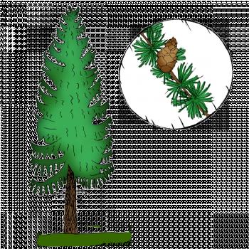"""Seznámení s kategorií """"stromy"""""""